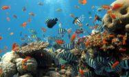 (بالصور)…أجمل الاسماك الملونة بالمحيط على الاطلاق!!