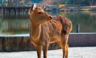 حيوانات غير متوقعة تعيش في مدن عديدة بالعالم !!