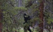 بالصور: أشياء غريبة تم اكتشافها بالصدفة في الغابات!!