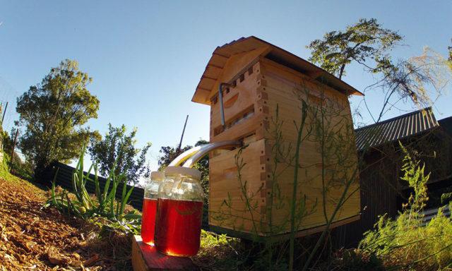 بالفديو خلية نحل جديدة تجمع العسل تلقائياً (لن تخاف التعرض للسعات النحل مجددا)!