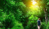 قضاء ساعتين في الطبيعة أسبوعيا يعزز من صحتك العامة