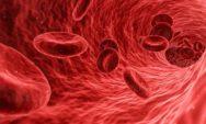 هام!!3 مواد غذائية تساعد في تحرر الشرايين وخفض الكوليسترول الضار