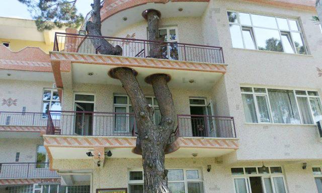 ابداع مهندسين معماريين رفضو قطع الاشجار لبناء المنازل