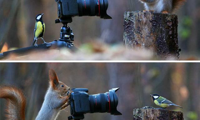 جلسة تصوير السناجب في صور ممتعة ومضحكة