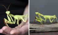 فنانة تصنع مجسمات مذهلة ومعقدة للحشرات من الورق (24 صورة)