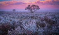 صور الأشجار خلال فترات الصباح الضبابية في هولندا (12صور)