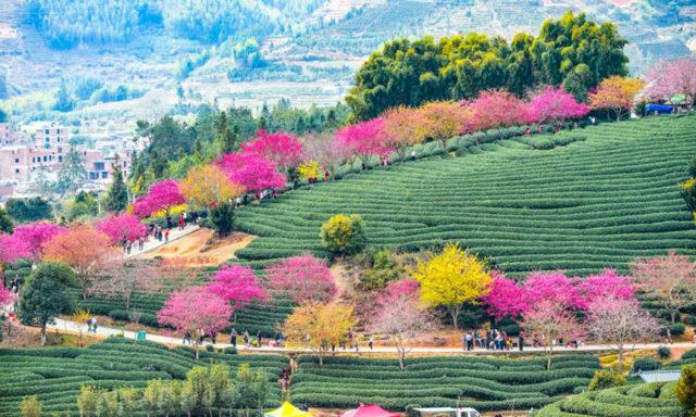أزهار الكرز: واحدة من أروع المعالم السياحية على الكوكب(20 صورة)