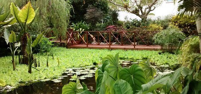 بالصور…استكشاف حدائق أندروميدا النباتية الرائعة(12 صورة)