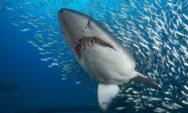 شاهد بالصور..أغرب و أعنف 8 أنواع من أسماك القرش في العالم