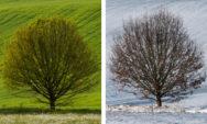 مصور يلتقط صور شجرة البلوط من خلال الفصول الأربعة(15 صورة)