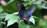 بالصور 10 من اغرب و اجمل الفراشات في العالم