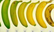 أي موزة ستختار؟ إجابتك قد يكون لها تأثير على صحتك