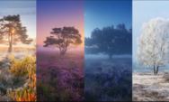 """المناظر الطبيعية: توالي فصول السنة في منطقة """"هيذر"""" الهولندية"""
