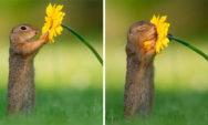 لحظات ثمينة: هذا ما يحدث في الطبيعة عندما لا يكون هناك أحد حولها!