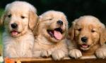 اجمل اسماء كلاب بالعربية و الإنجليزية
