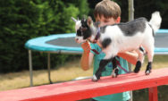 العلاج بالحيوانات: وسيلة جديدة لمساعدة الأطفال ذوي الاحتياجات الخاصة