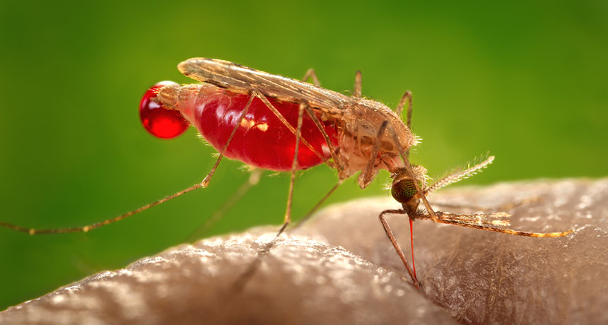 حقائق ومعلومات عن البعوض