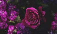 خلفيات ورد وباقات زهور HD جديدة
