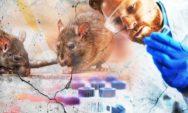 اعراض فيروس هانتا : ما هو فيروس هانتا القاتل Hantavirus وهل حقا هوا قاتل!