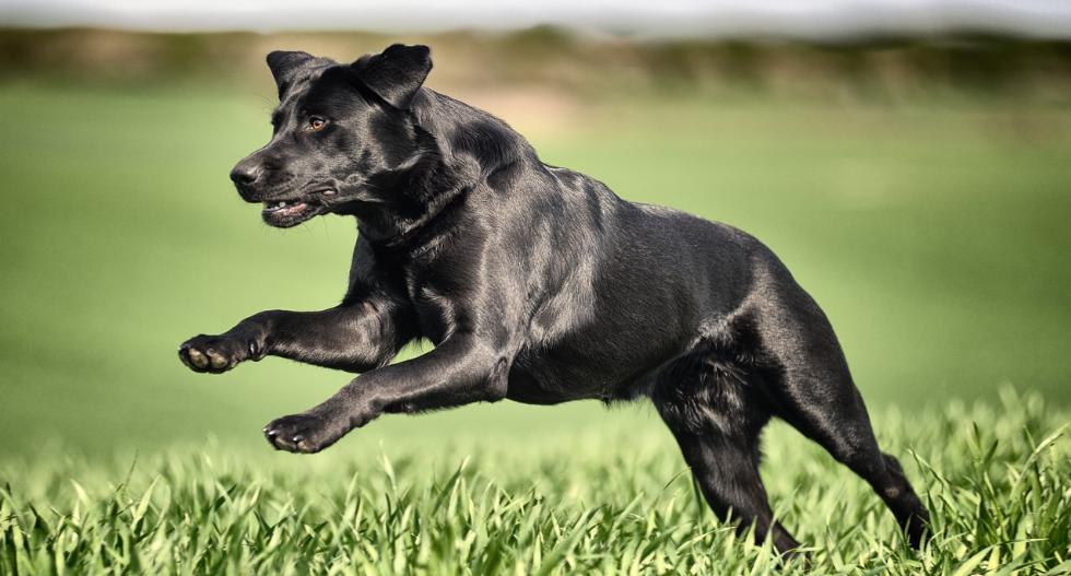 تفسير الاحلام الكلاب في المنام
