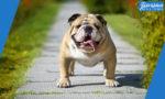 الكلاب في المنام : رؤية الكلب في المنام بالتفصيل