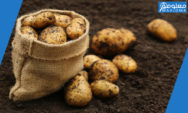 تفسير رؤية البطاطس في المنام بالتفصيل