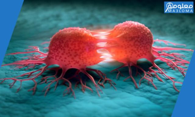 أثر المواد الكيميائية المسرطنة في انقسام الخلايا وتكاثرها داخل جسم الانسان