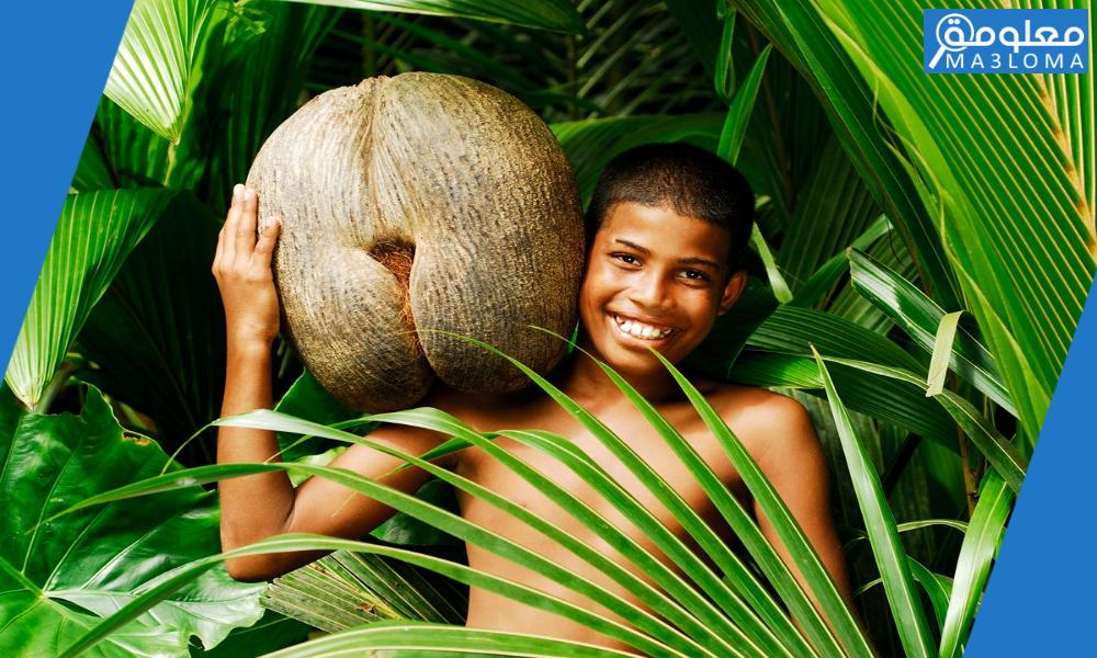 ماهي اكبر بذرة في العالم .. تعرف على وزن  هذه البذرة العجيبة