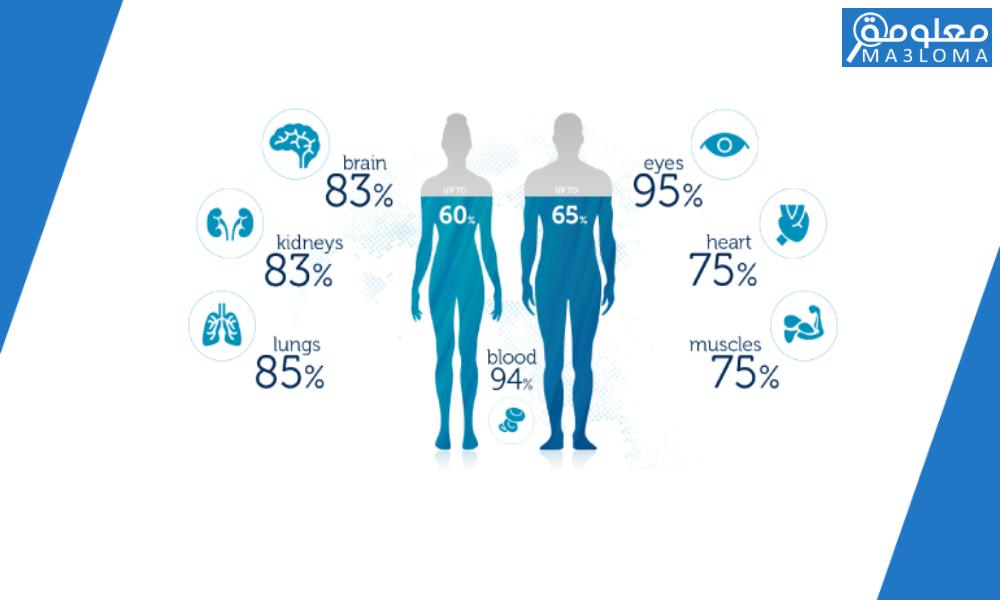 ما هي نسبة الماء في جسم الانسان البالغ ؟