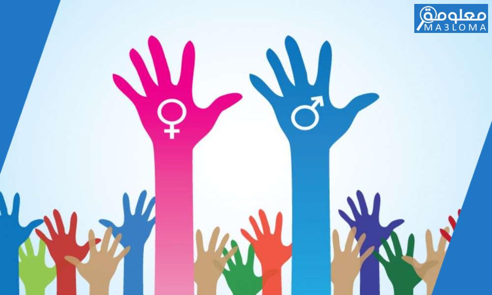 رابط اختبار النسوية docs