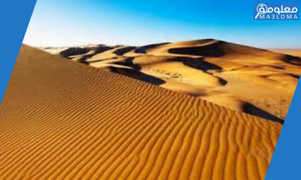 النبات الذي يسهم في تثبيت كثبان الصحاري الرملية يُسمى